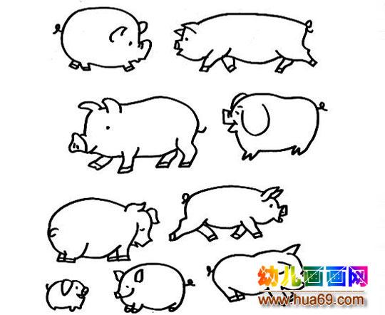 各种形状的小猪的简笔画