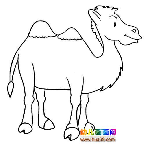 动物简笔画:一只骆驼5