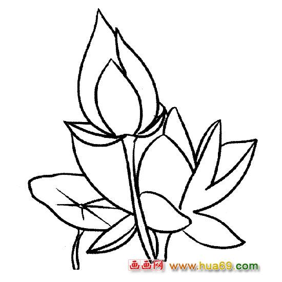 花卉简笔画:漂亮的荷花1,画画网